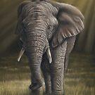 Elephant by Richard Macwee