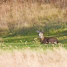 Male Deer by Karl R. Martin