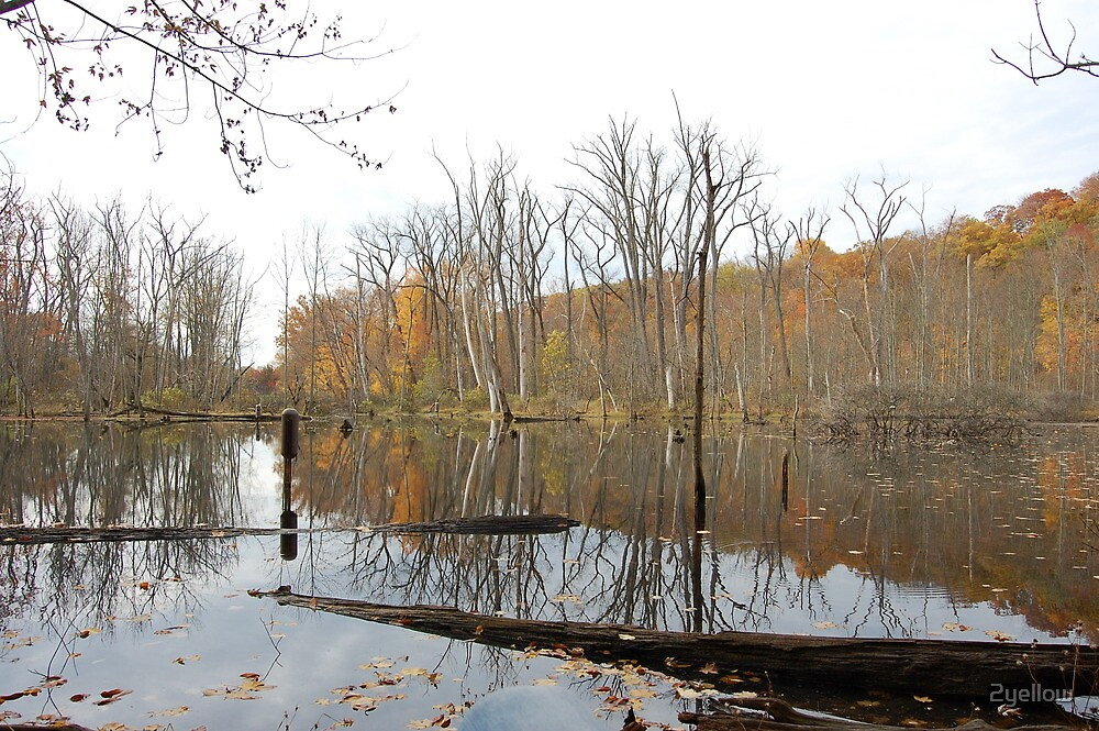 Reflections in the fall by 2yellow