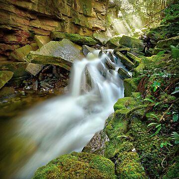 Wurragarra Creek, Tasmania by kevinmcgennan