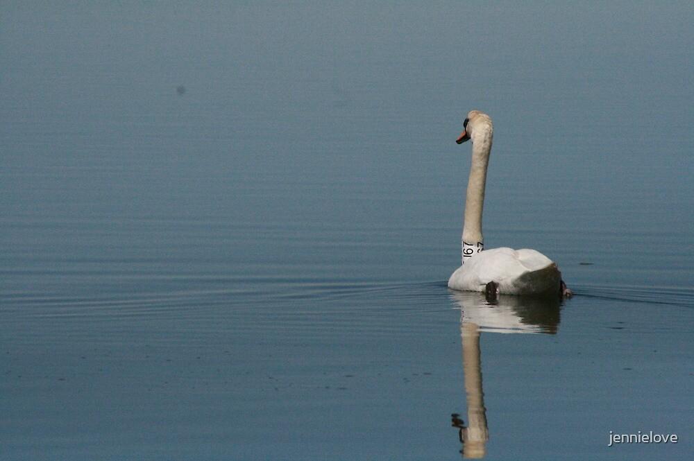 Swan Lake? by jennielove