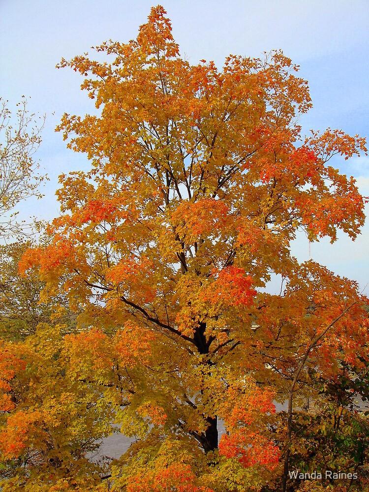 Autumn Tree In Minnesota by Wanda Raines