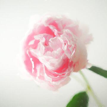 Blush Painterly Peony by ilzesgimene