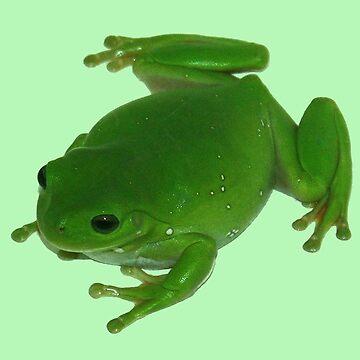 Green Frog by Filifjonka