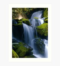 Whitehead Creek #5 Art Print