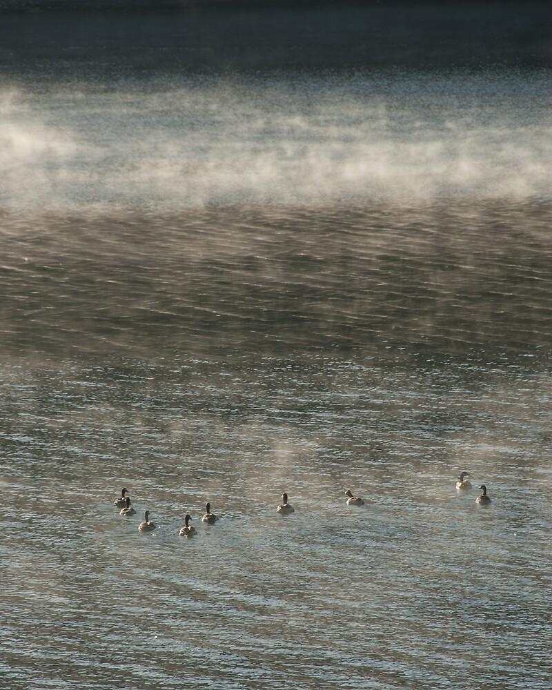 Dawn, Santa Clara County by Cathy P. Austin