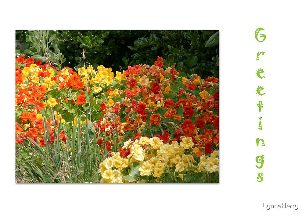 Flower Greetings Card by LynneHerry