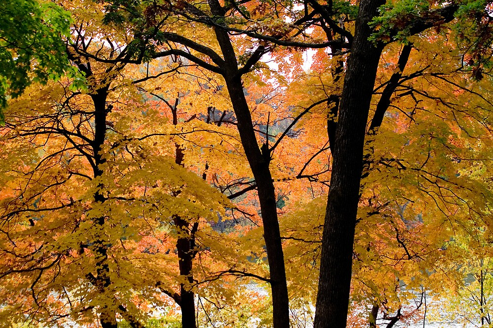 Seeing more fall by Mike Smith