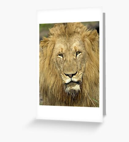 Close Up Lion Greeting Card