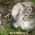 Best Friends, Tabby Kittens by Chriss Pagani