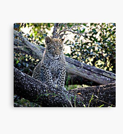 Bue Eyed Leopard Cub Canvas Print