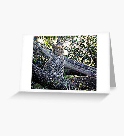 Bue Eyed Leopard Cub Greeting Card