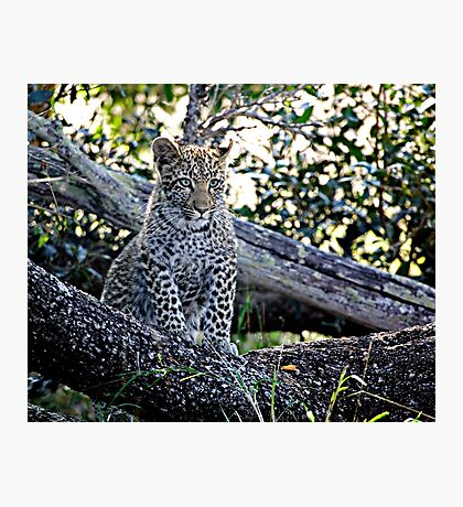 Bue Eyed Leopard Cub Photographic Print
