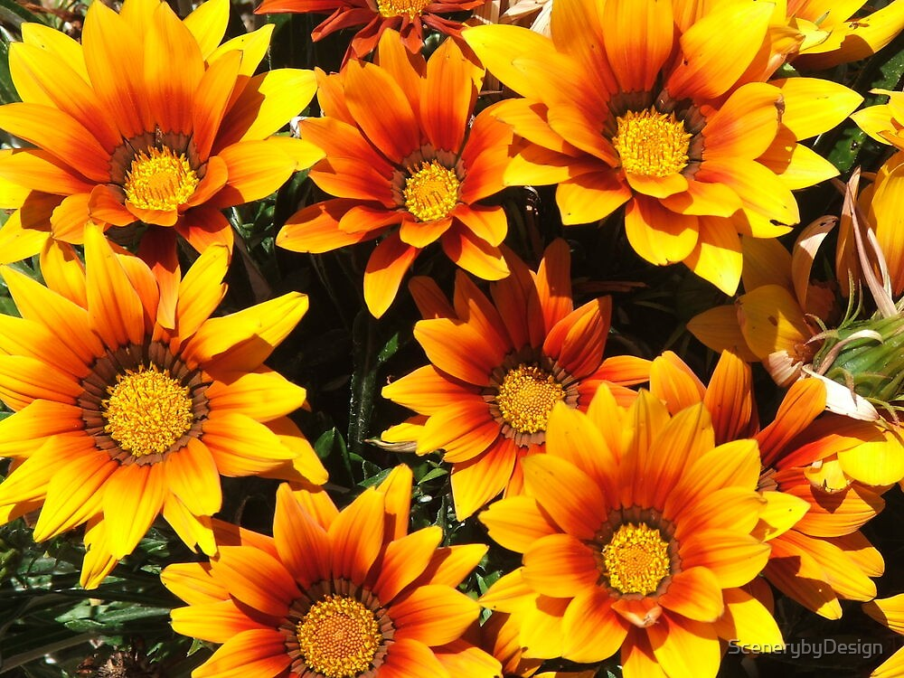Daisies (3076) by ScenerybyDesign