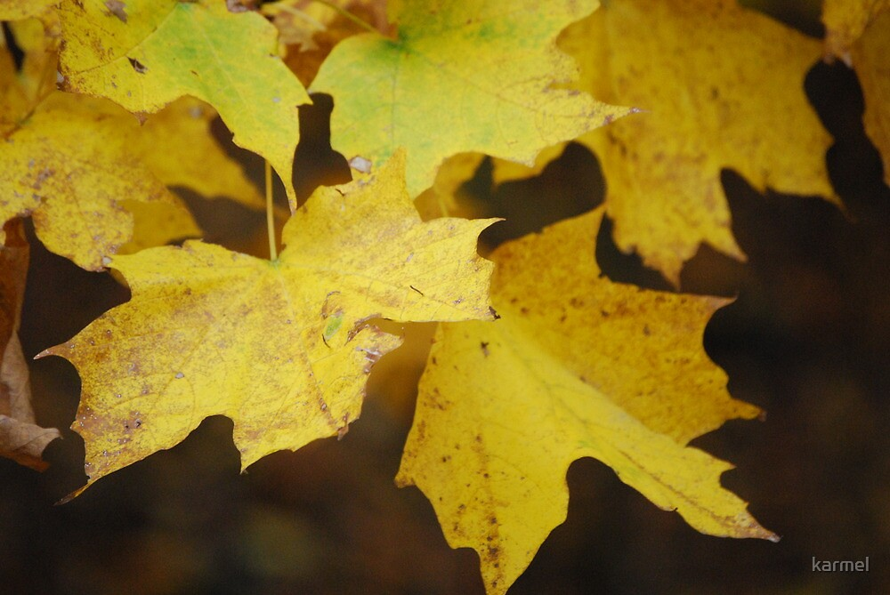 Yellow Leaves Of Fall by karmel