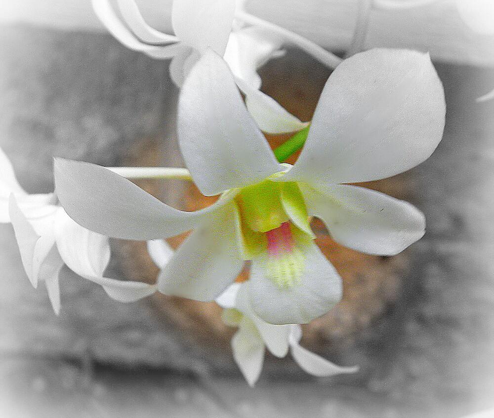 White Flower by Gabrielle Harrington