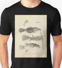 The fishes of India by Francis Day 176 - Acentronura Anacanthus Cornutus Hippocampus hystrix Minium T-Shirt