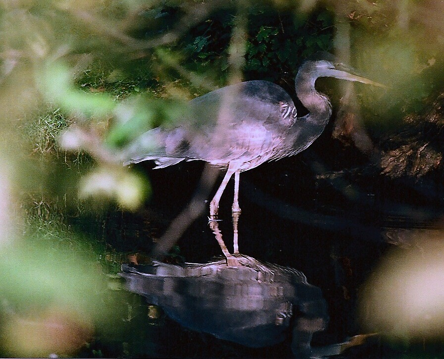 Creeping Down the Canal by Deanna Azzara