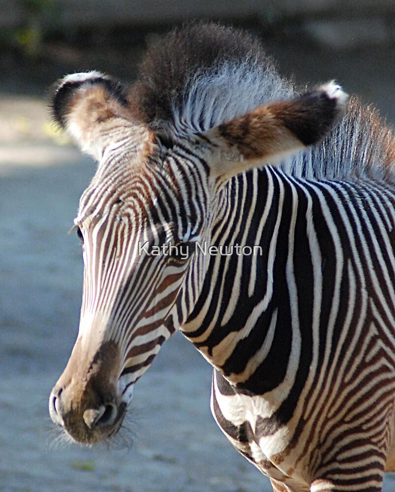 Zebra baby by Kathy Newton
