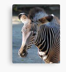 Zebra baby Leinwanddruck