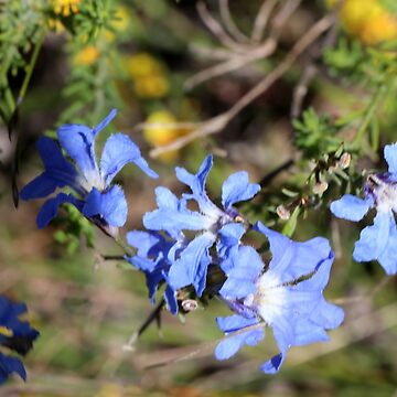 Blue Wildflower by STHogan
