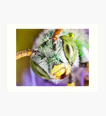Green Sweat Bee Art Print