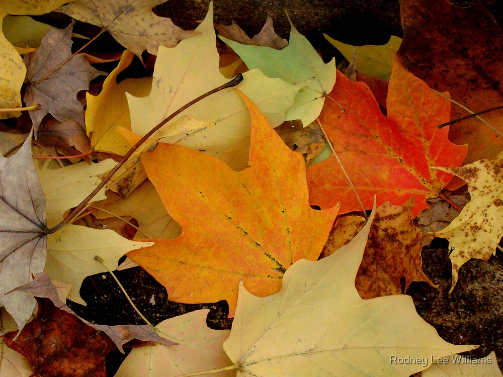 Autumn Moods 17 by Rodney Lee Williams