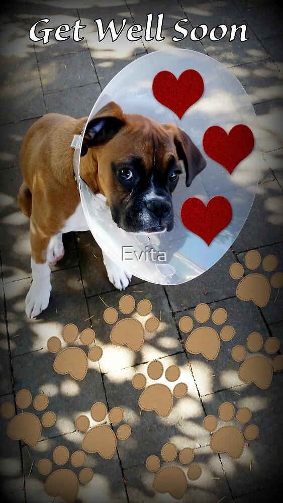 Gute Besserung - Boxer Dogs Series von Evita