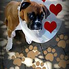 Get Well Soon - Boxer Dogs Series by Evita
