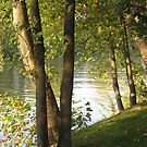 Looking Through Trees Along The Seine by Orla Cahill Photography