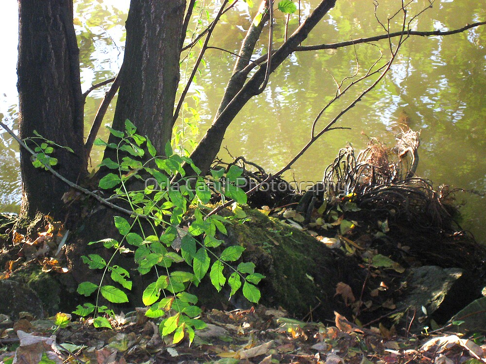 Foliage Along the Banks of The Seine by Orla Cahill Photography