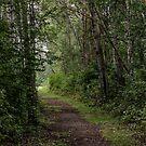 Path less taken by Sylvia Labelle