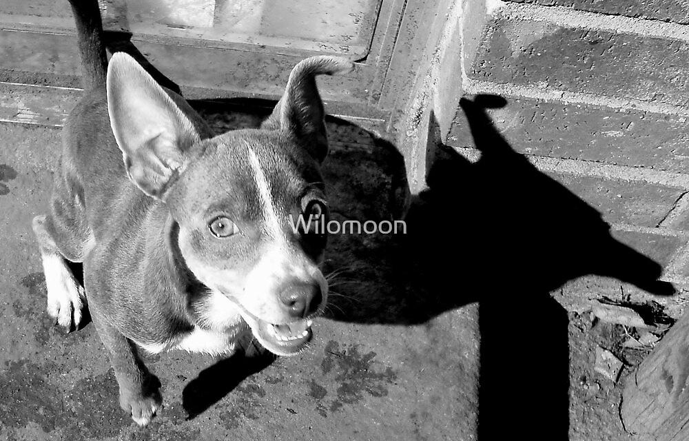 Pixie's Shadow by Wilomoon