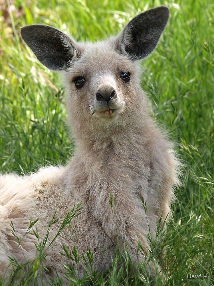Rare white kangaroo Canberra Australia by Dave P