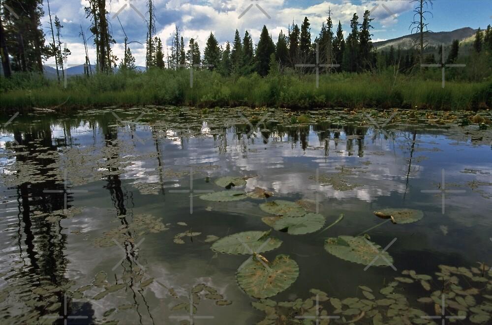 Warm Lake by CarolM