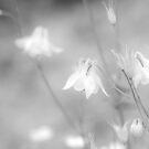 White by Caroline Gorka
