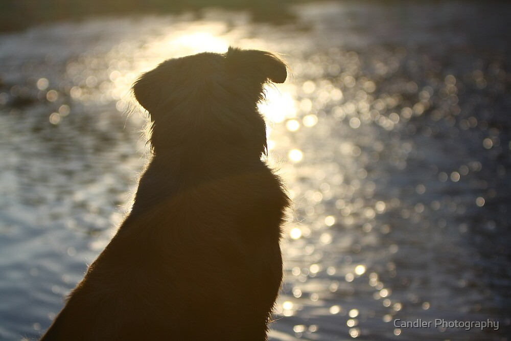 Man's best friend by Candler Photography