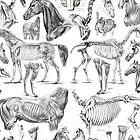Horse Anatomy (black on white) by adamcampen