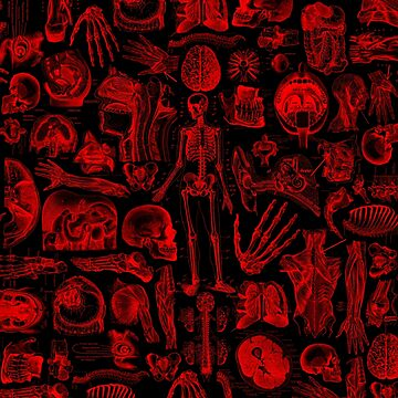 Black and Red Human Anatomy Print by adamcampen