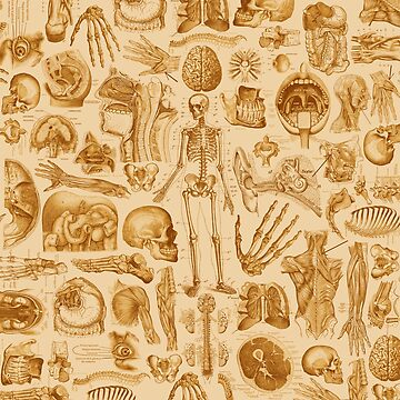 Human Anatomy Tan Print by adamcampen
