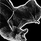 Leucism: Van Gelder's Bat by NoelleMBrooks