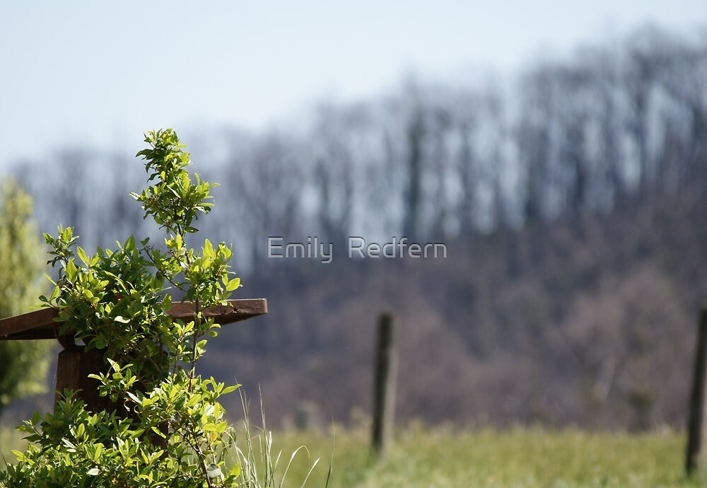 burnt in the background by Emily  Redfern