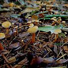 Mushrooms in the forest by Mjay