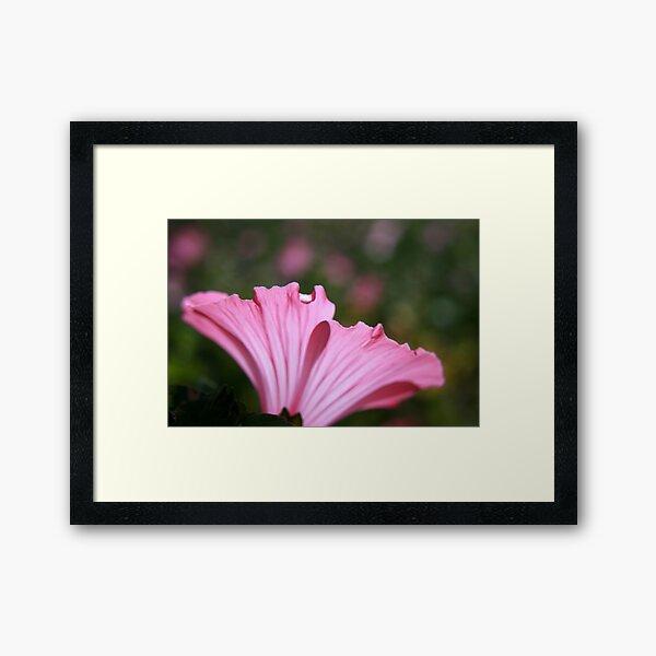 Delicate Pink. Framed Art Print