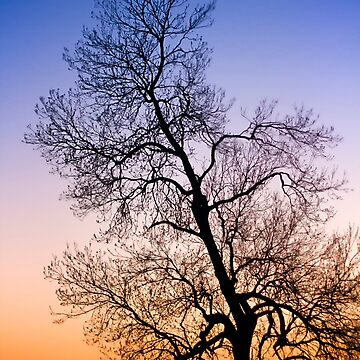 Sunset Tree Orange and Blue by heidiannemorris