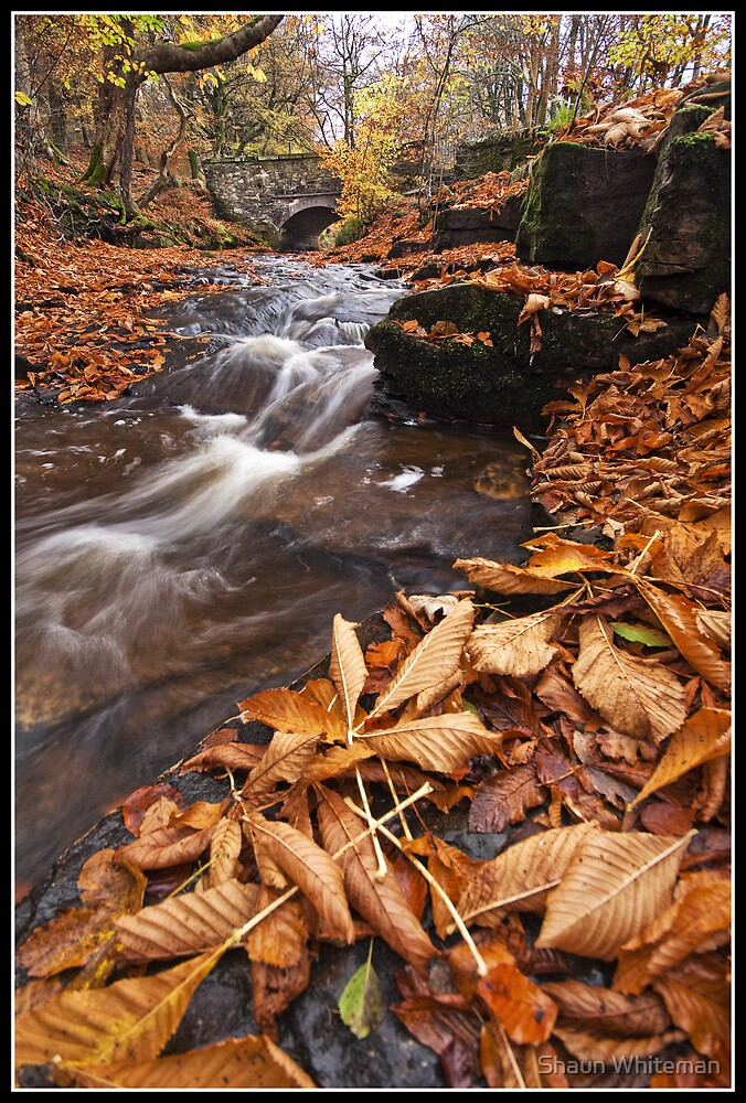 Rocky brook in the autumn by Shaun Whiteman