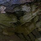 bark of the wood by Mjay