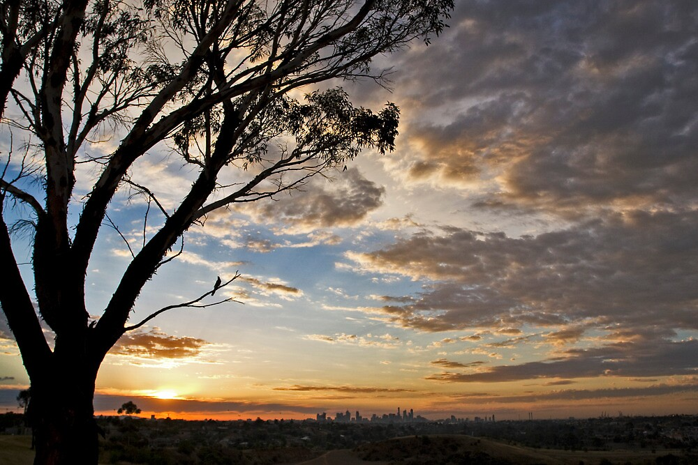 sunrise - essendon by david de roach