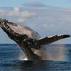 Whales n Rainbows by Jodie Lowe