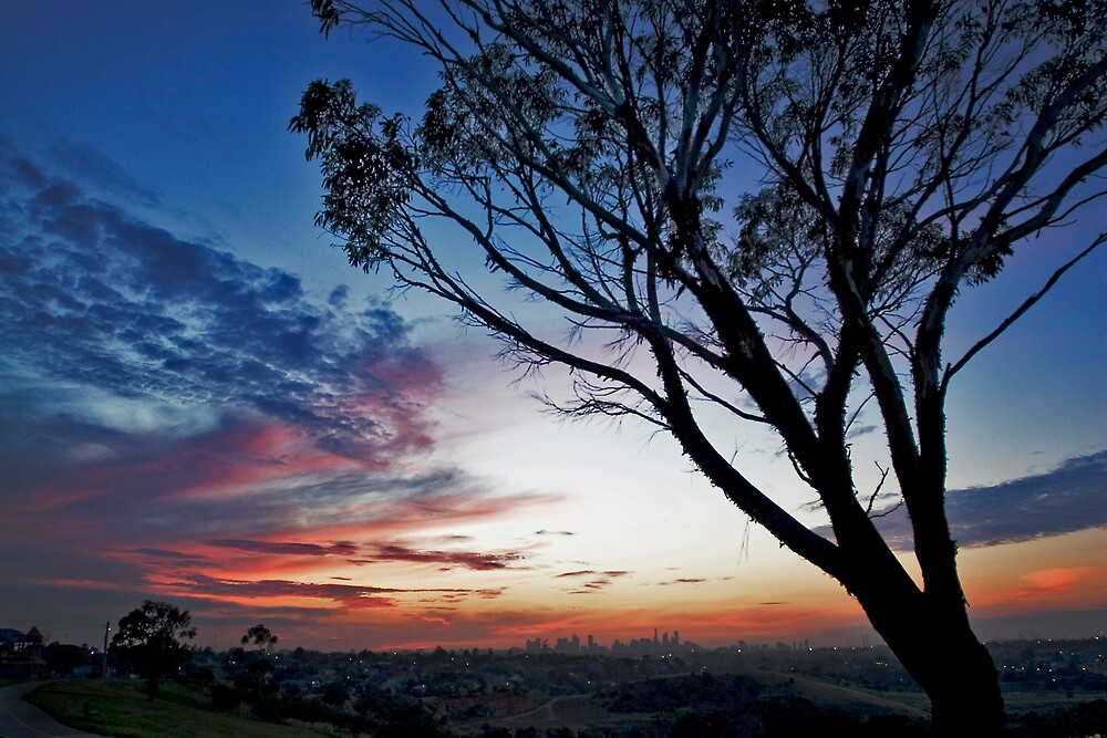 sunrise eucalyptus in spring by david de roach